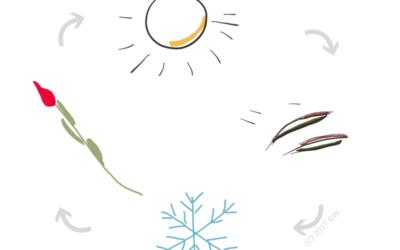 Herken jij de energie van de seizoenen?